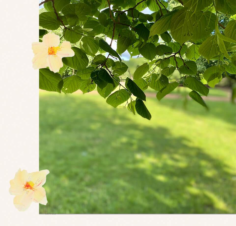 arbre sacré produit de beaute