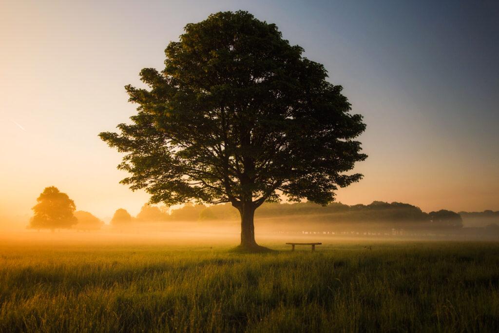 le tilleul, l'arbre de la joie